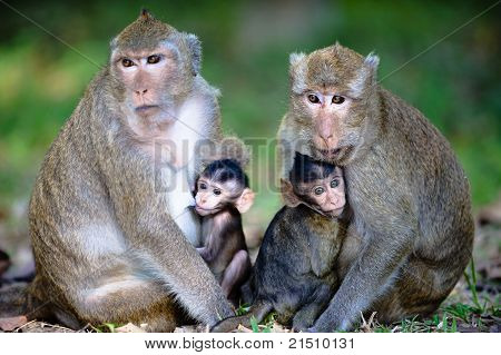 Close Monkey Family