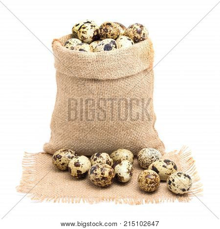 Sack bag with group of quail egg close up on texture sack with frayed edges isolated on white background
