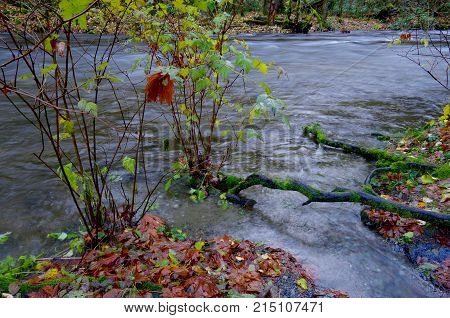 Goldstream in flood in the autumn showing brown maple leaves and submerged bushes.