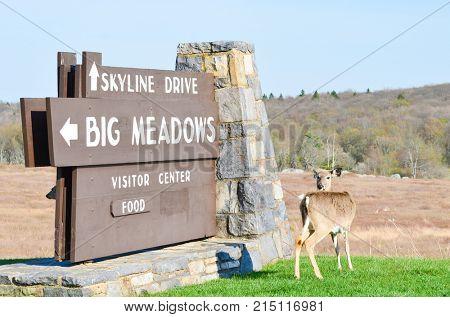 VIRGINIA, USA - MAY 7, 2014: Shenandoah National Park Big Meadows Visitor Center Sign and an deer in Virginia, USA in fall season