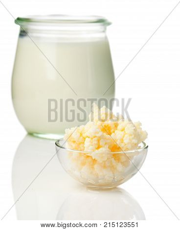 Milk kefir grains. milk kefir or búlgaros is a fermented milk drink that originated in the Caucasus Mountains made with kefir