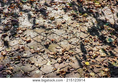 Cobblestones covered by autumn leaves under the tepid sun