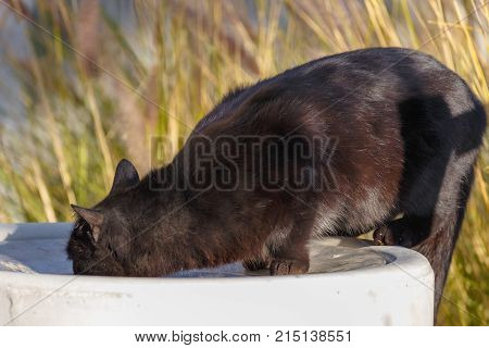 Homeless Black Cat