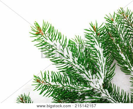 green branches of Christmas tree on snow
