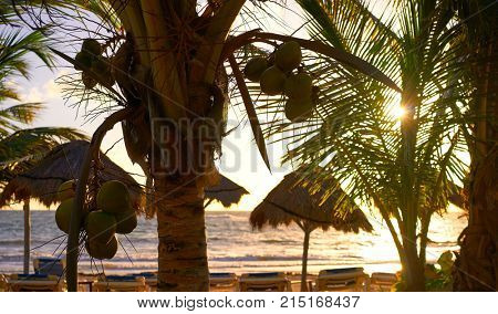 Mahahual Caribbean beach sunrise palm trees in Costa Maya of Mayan Mexico