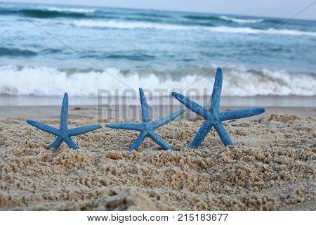 three blue star fish on the beach