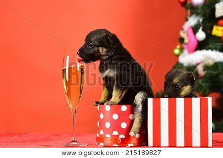 Year Of Dog, Holiday Celebration With Champagne In Wine Glass.