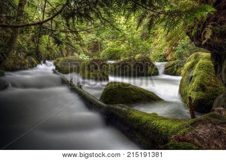 Moss covered logs in Whatcom falls park in Bellingham, Washington.