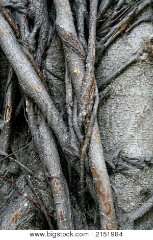 Close up of a tree trunk suitable as a background poster
