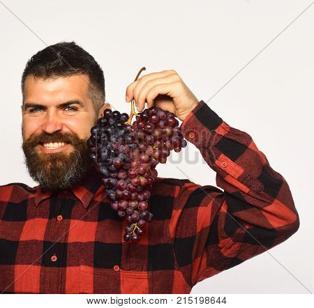 Man With Beard Holds Bunch Of Purple Grapes