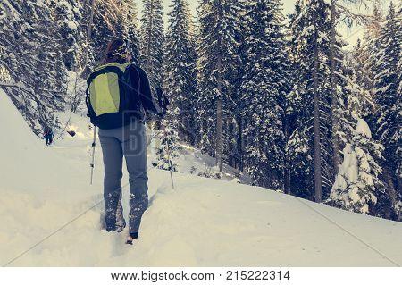 Female hiker walking in a winter forest. Fresh snow.