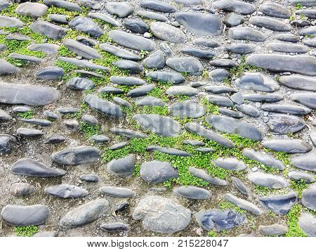 Stone background - gray stones and bright green grass between them. Closeup of a green lawn grass - stone walkway with green grass and gray stones, natural stone background with green grass