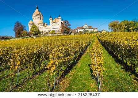Vufflens castle and vineyards in Switzerland in the autumn season
