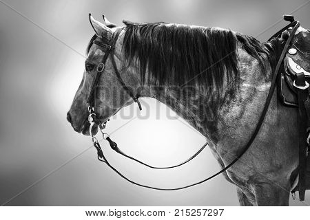 Horse competitor black white isolated animal sport background