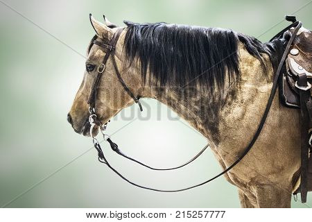 Horse competitor brown isolated animal sport background