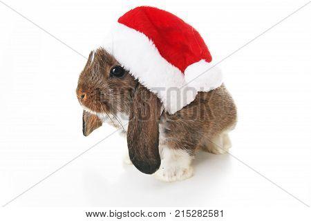 Christmas rabbit. Celebrate holiday with Christmas bunny. Rabbit waering Santa Claus hat. Isolated white studio background.