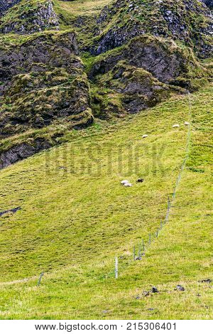Mountain Slope With Icelandic Sheep In Iceland