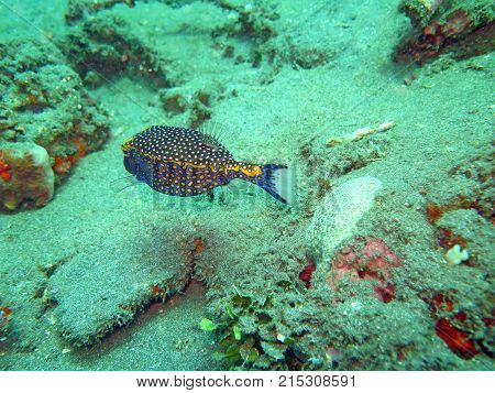 Thriving Coral Reef Alive With Marine Life And Fish, Bali