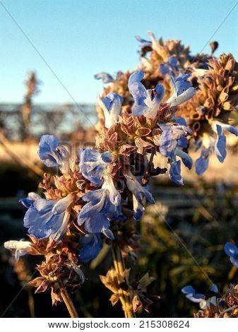 Sweet little blue flowers with a blue sky