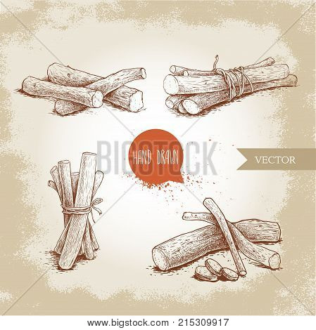 Hand drawn sketch style standing liquorice roots bunches set. Herbal and aromatic vector illustrations collection.