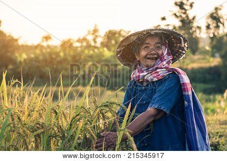 Farmer with rice harvest, Concept farmer rice.