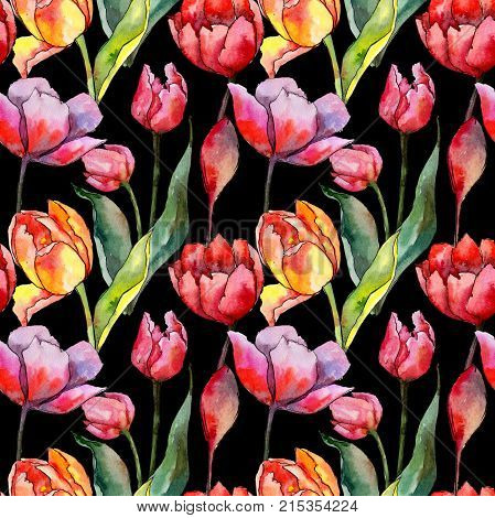 Wildflower tulip flower pattern in a watercolor style. Full name of the plant: tulip. Aquarelle wild flower for background, texture, wrapper pattern, frame or border. poster