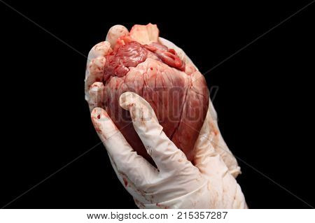 Abstract Organ Transplantation. A Human Heart In Woman's Hand. Saving Lives Hopelessly Sick. Complex
