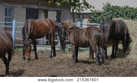 Herd Of Horses On A Farm Near A Haystack