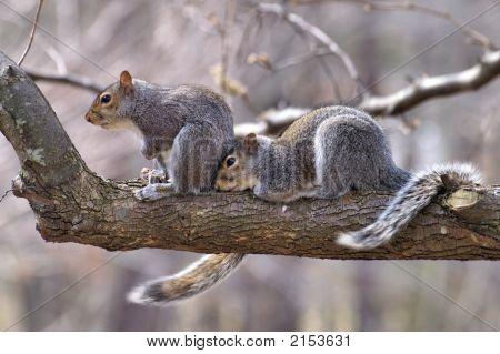 Happy Squirrel Couple
