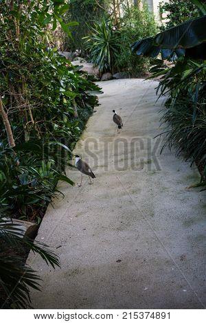 tropical bird on path way in botany garden green plants