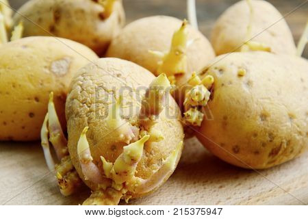 Potato sprouts are certainly not healthier than normal potatoes. When they sprout, the starch in it is converted into sugar.