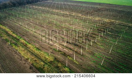 Aerial view on hops field. Field of hops after harvesting