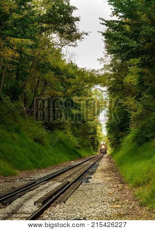 A steam engine approaches in the distance in a densely wooded section of track