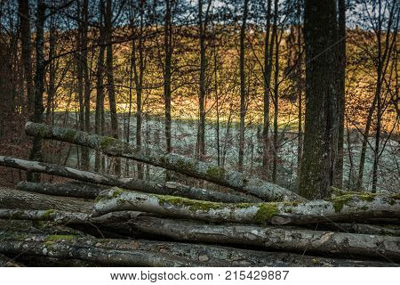 Felled trees in the middle of a colorless forest