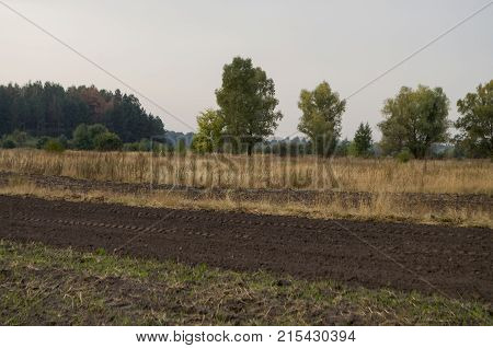 Cultivated field in the early autumn. Dry plants around. Green trees far away. Morning
