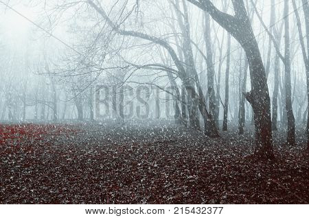 Winter landscape. Foggy early winter park with winter snow falling on the dry autumn leaves. Beginning of the winter season.