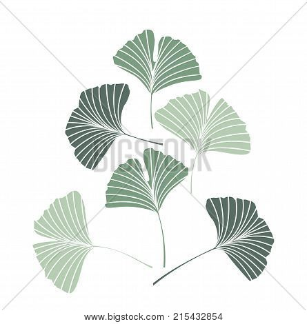 ginko leaves images, illustrations, vectors ginko leaves