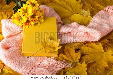 Book And A Warm Scarf On Carpet Of Autumn Leaves