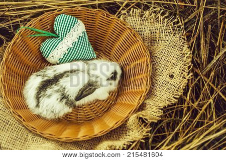 Cute Rabbit Bunny Sitting In Wicker Bowl With Green Heart