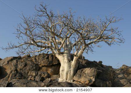 Bushland Tree