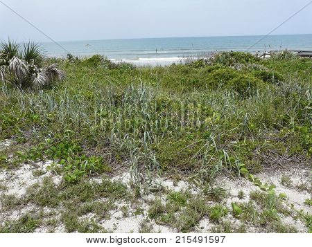 This landscape of Apollo Beach on Florida's Canaveral National Seashore displays a view of the Atlantic Ocean and a variety of coastal vegetation.