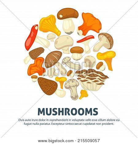 Mushrooms edible mushrooming poster. Vector flat champignon and boletus or forest chanterelle and lobster mushroom, exotic maitake or matsutake and shiitake, morels and russula or gourmet truffle