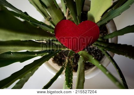 Red Heart In The Cactus Flower Pot ,for Valentine Day Card Background Top View