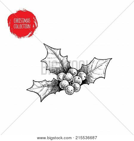 Hand drawn sketch holly berry. Christmas seasonal plant. Winter holiday symbol. Vector illustration isolated on white background.