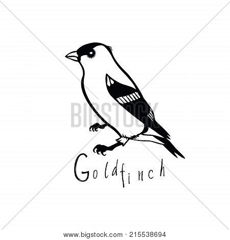 Birds collection Goldfinch Black and white vector object
