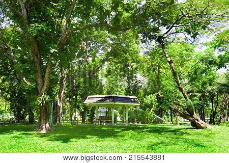 Lumphini Park. Green grass and trees. Scenery outdoor.Bangkok landmark