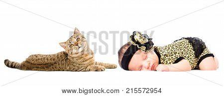 Portrait of cute newborn sleeping girl and cat Scottish Straight, isolated on white background