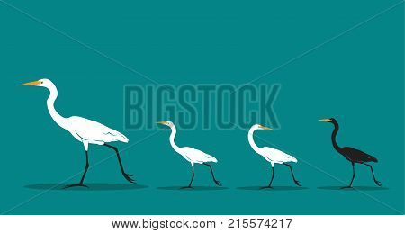 Vector of walking bird on blue background Difference concept. Animal Idea.