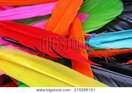 Beautiful rainbow color colored bird feathers. Parrot colors goose duck colorful painted feathers. Feather texture background or wallpaper for any concept. Colorful Studio photo.