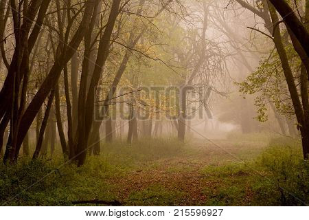 Landscape of forest on foggy morning in autumn time